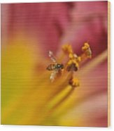 Little Hoverfly Wood Print
