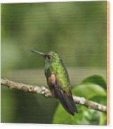 Little Hummingbird Wood Print