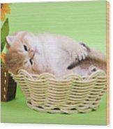 Little Kitten Wood Print