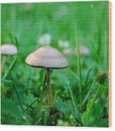 Little Mushrooms Wood Print