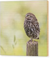 Little Owl Looking Up Wood Print