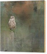 Little Owl On A Fence Wood Print