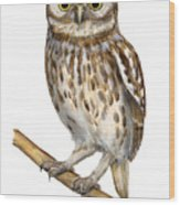 Little Owl Or Minerva's Owl Athene Noctua - Goddess Of Wisdom- Chouette Cheveche- Nationalpark Eifel Wood Print