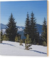 Little Pine Forest - Impressions Of Mountains Wood Print