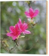 Little Pink Wood Print