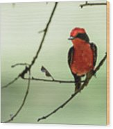 Little Red Beauty - Vermilion Flycatcher Wood Print