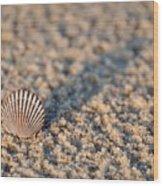 Little Seashell - Jersey Shore Wood Print