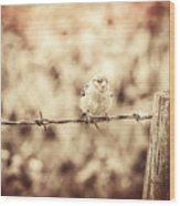 Little Sparrow Wood Print