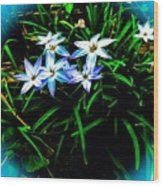 Little Star Wind Flowers Wood Print