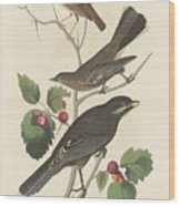 Little Tawny Thrush Wood Print