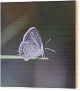 Little Teeny - Butterfly Wood Print