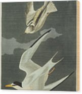 Little Tern Wood Print