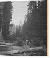 Little Tree Wood Print
