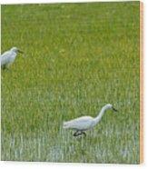 Little White Egret Wood Print