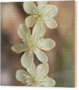 Little White Wildflowers  Wood Print