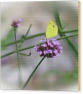 Little Yellow Butterfly On Verbena Wood Print
