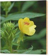 Little Yellow Flower Wood Print
