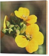 Little Yellow Flowers Wood Print