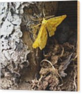 Little Yellow Moth Wood Print