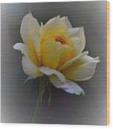Little Yellow Rose Wood Print