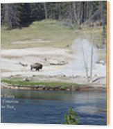 Live Dream Own Yellowstone Park Bison Text Wood Print