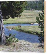 Live Dream Own Yellowstone Park Elk Herd Text Wood Print