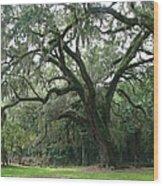 Live Oak 1 Wood Print