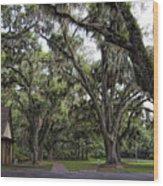 Live Oak And Spanis Moss Landscape Wood Print