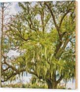 Live Oak And Spanish Moss 2 - Paint Wood Print