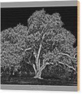 Live Oak At Hogan's Hole- Lion's Golf Course Wood Print