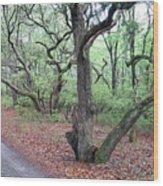 Live Oak Forest Wood Print