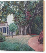 Live Oak Gardens Jefferson Island La Wood Print