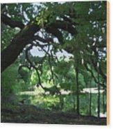 Live Oak Hidden Pond Wood Print