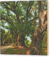 Live Oak Lane Wood Print