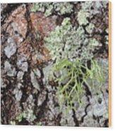 Live Oak Lichen II Wood Print