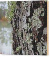Live Oak Lichen Wood Print