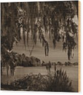 Live Oak Tree Spanigh Moss Sepia Silhouette Wood Print