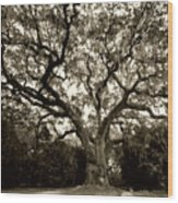 Live Oak Tree With Spanish Moss Wood Print