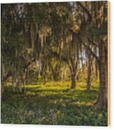 Live Oak Tree Wood Print