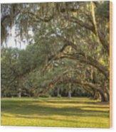 Live Oak Trees Sunrise Wood Print