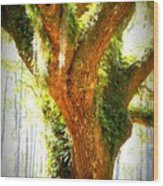 Live Oak With Cypress Beyond Wood Print