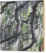 Live Oak With Spanish Moss And Palms Wood Print