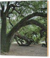 Live Oaks Wood Print