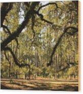 Live Oaks Silhouette Wood Print