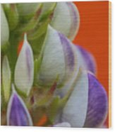 Lively Lupine Wood Print
