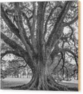 Living History Bw Wood Print