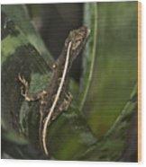 Lizard 2 Wood Print