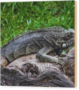 Lizard At The Zoo Wood Print