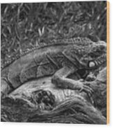 Lizard-bw Wood Print