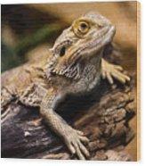 Lizard - Id 16217-202733-1873 Wood Print